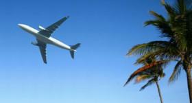 airlinepalms.jpg