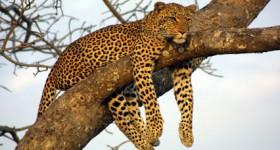 safari-kruger.jpg
