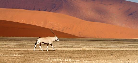 En oryx i sandbankerne Sossusvlei, Namibia (foto: KLM/PR)